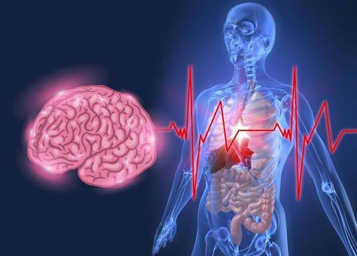 Psiconeuroimunologia: relação entre cérebro e sistema imunológico