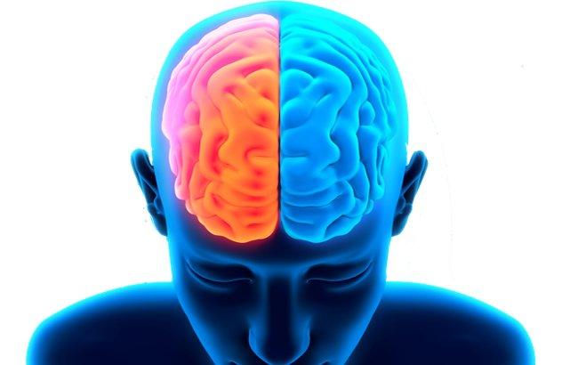 Lado direito e lado esquerdo do cérebro. O que dizem de nós?