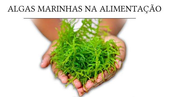 benefício das algas para a saúde