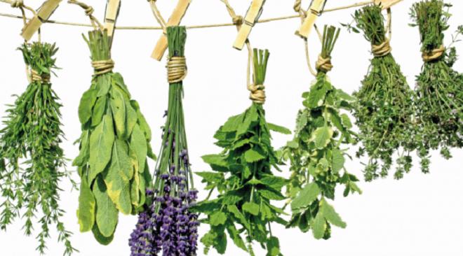 Ervas aromáticas: um toque de saúde à refeição
