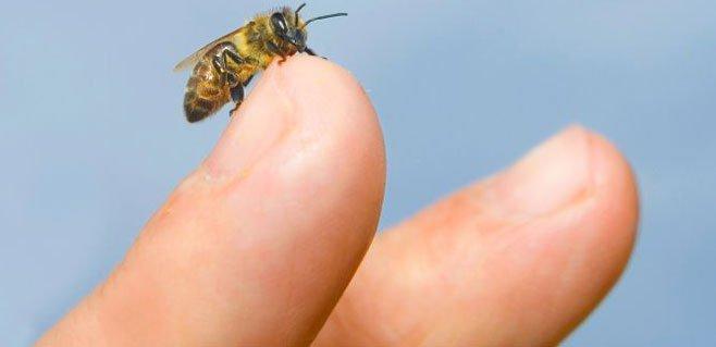 Alergia ao veneno de abelhas ou de vespas