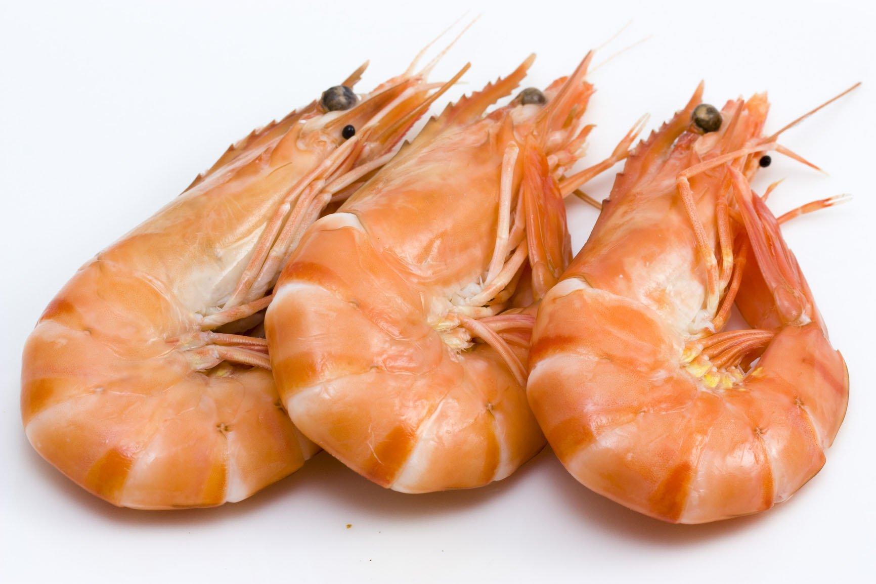 benefícios de comer camarão