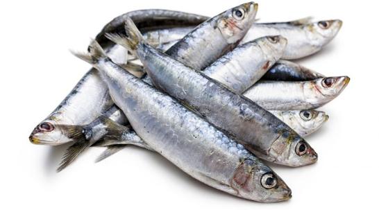 benefícios da sardinha para saúde