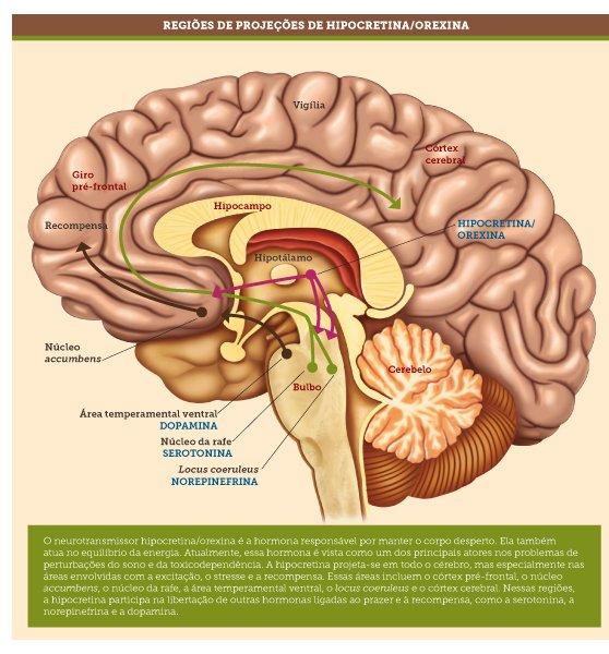 sintomas da narcolepsia